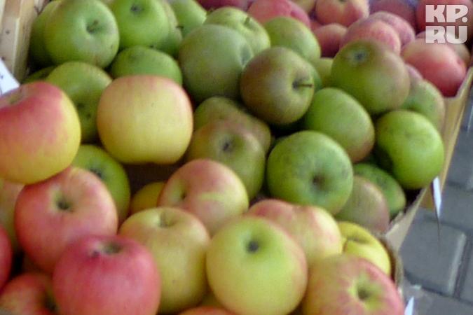 Неменее 400кг санкционных яблок изПольши уничтожили наКубани