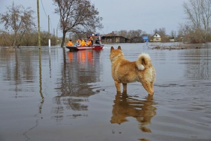 В нынешнем году отпаводка вКазани может страдать неменее тысяча человек