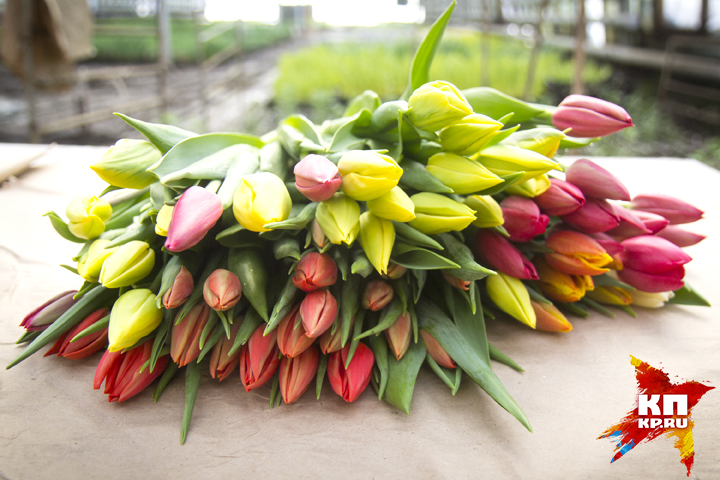 На8марта омичи пострадали от«цветочных» мошенников изНовосибирска