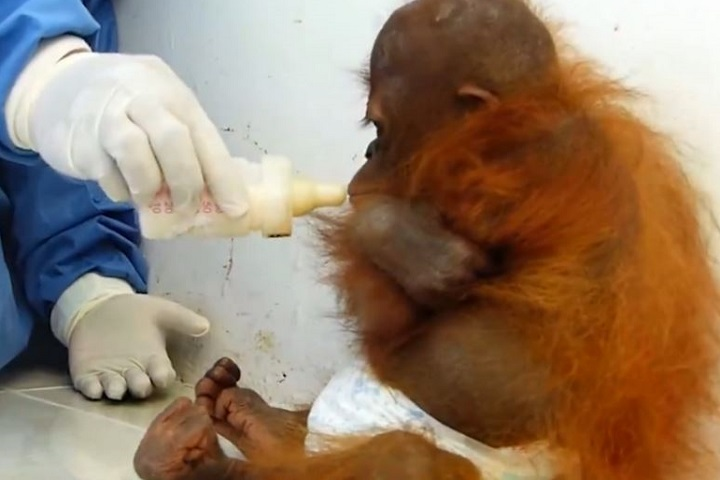Двухлетняя Джосс была разлучена с матерью в раннем детстве Фото: скриншот с видео