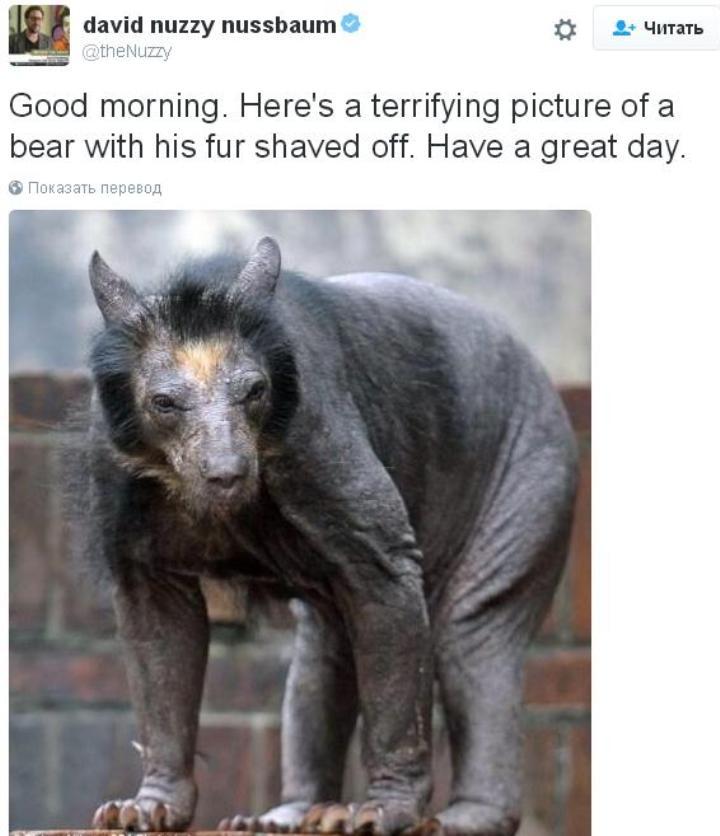 Эта ужасающая картина бритого медведя сделала мой день Twitter/david nuzzy nussbaum
