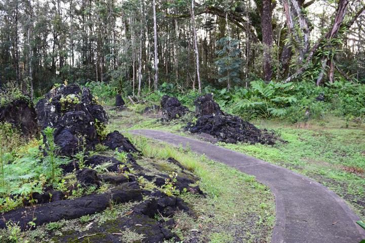 Лес с лавовыми деревьями на Большом острове - здесь и растут Фаллюсы нескромные.