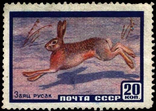 В 1960 году будущего «белорусского» зайчика поместили на 20-копеечную почтовую марку серии «Фауна СССР»...
