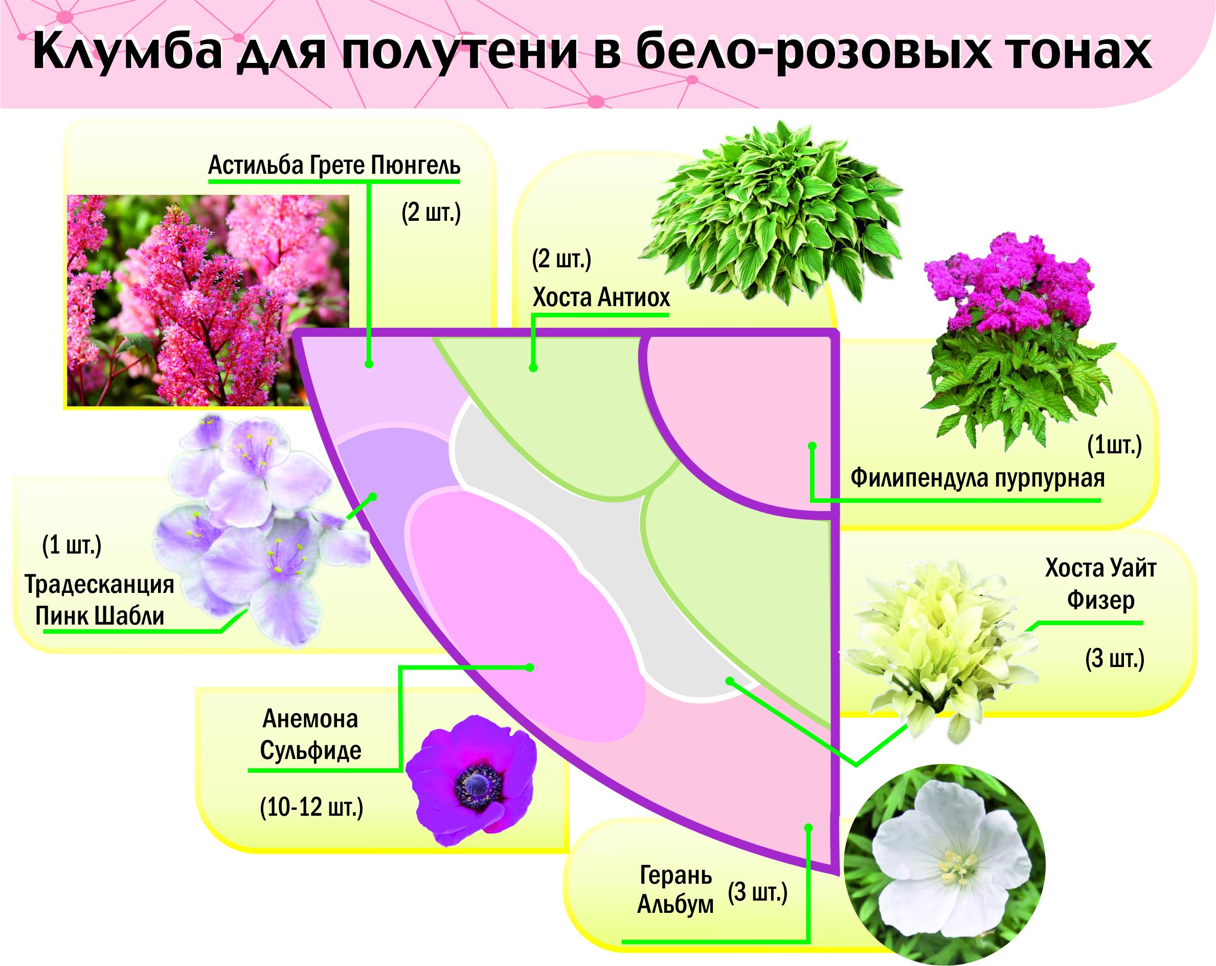 Клумбы с описанием цветов фото