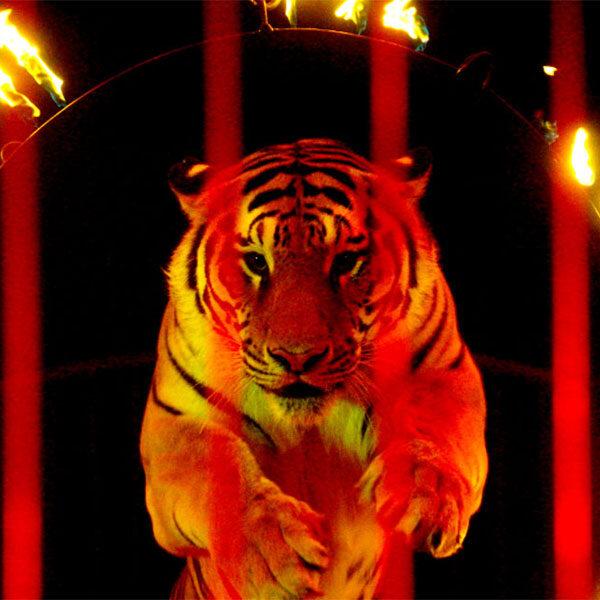 Фестиваль циркового искусства «ИДОЛ»