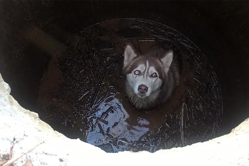 Картинки по запросу В Хабаровске спасли упавшую под лед собаку