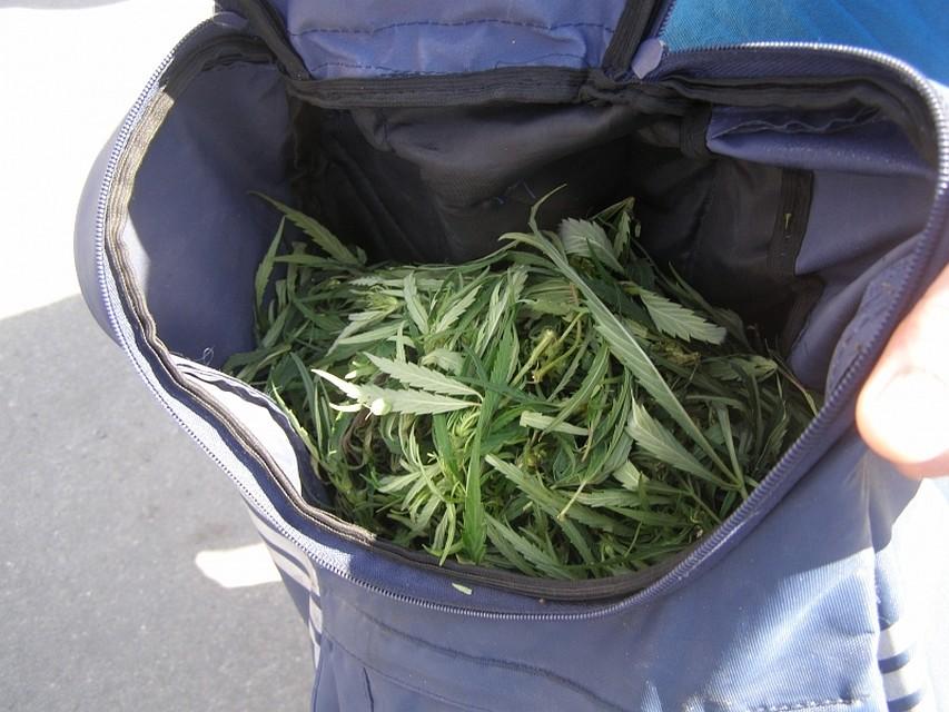 Меня поймали с марихуаной конопля на гидропоники