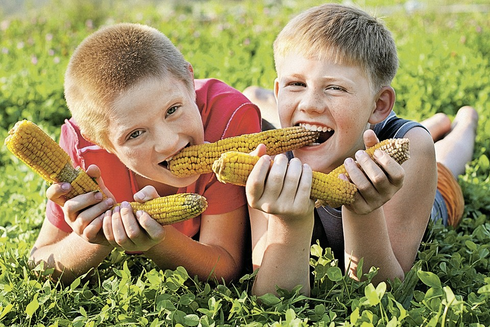Вареная кукуруза - одно из самых любимых в России блюд. Фото: фотобанк Лори