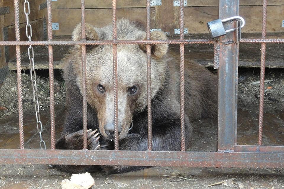 Фото медведей частные объявления дать бесплатно объявление минск