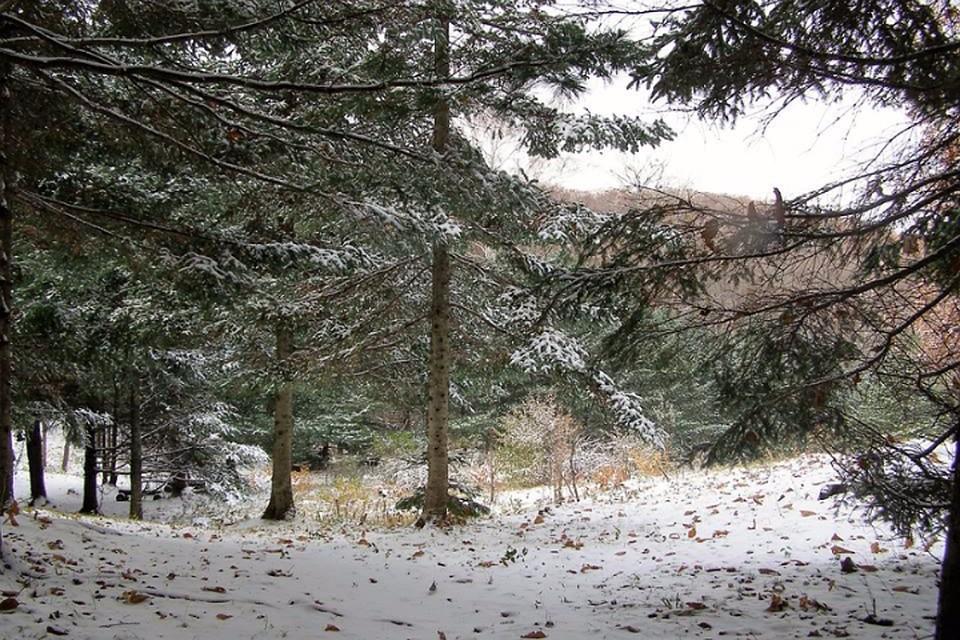 Погода в хабаровске 9 ноября