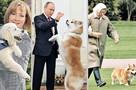 Лабрадор, акиту-ину и дворняга: какие собаки в любимчиках у президентов