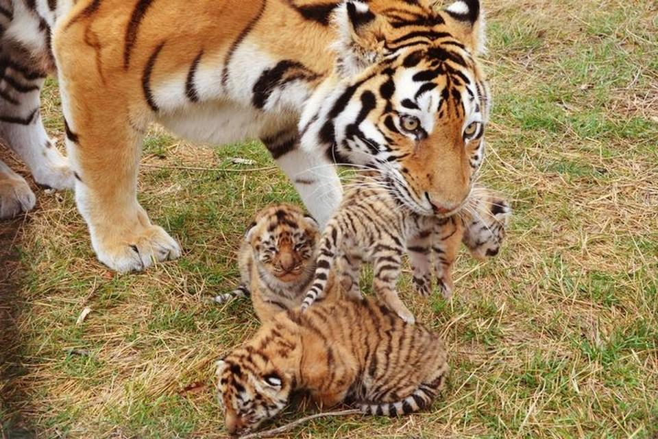 Хвостатая мамочка души не чает в своих детях.Фото: Татьяна Алексагина.