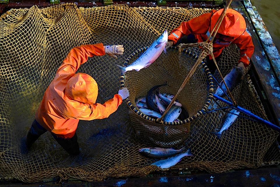 Делегаты съезда обсудят результаты работы рыбохозяйственного комплекса страны за 5 лет