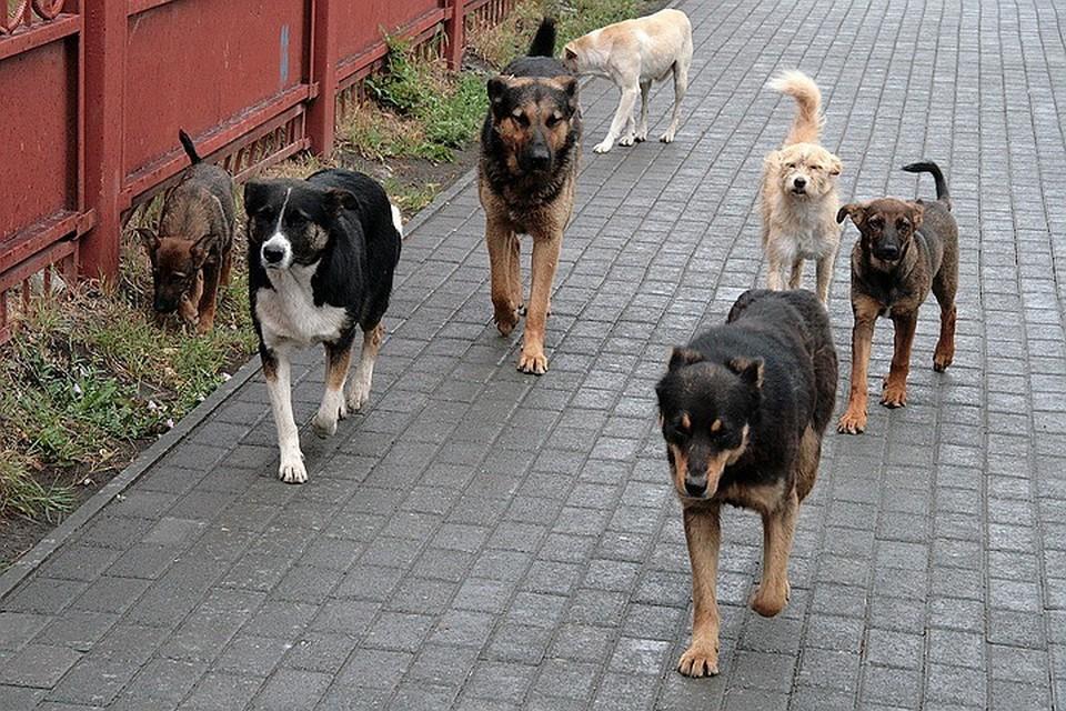 В Махачкале собаки вновь загрызли ребенка