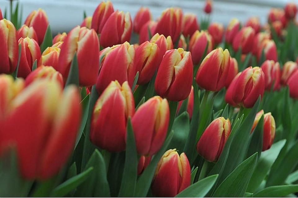 В парках Москвы женщин поздравят с 8 марта