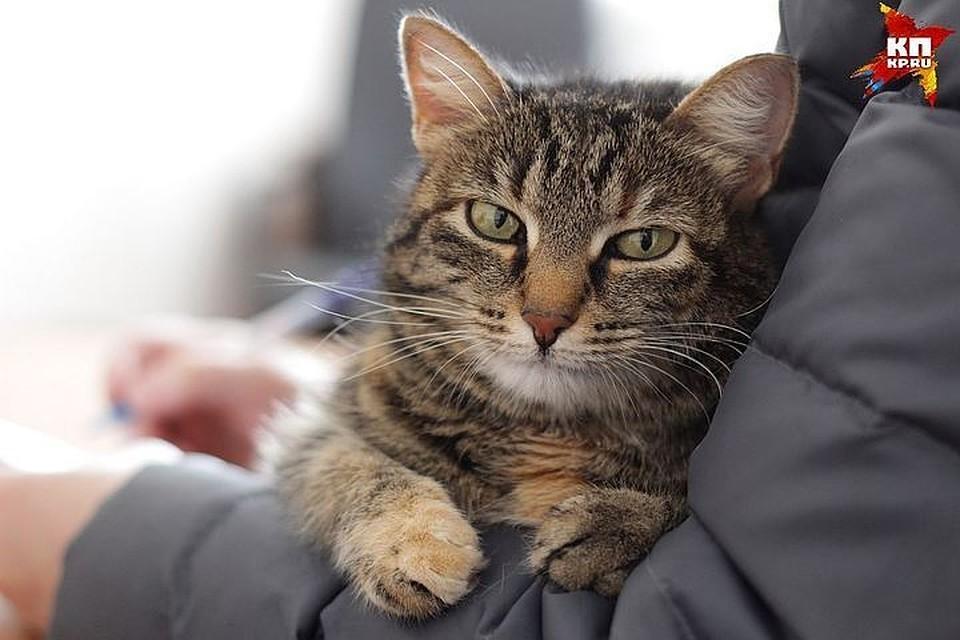 Бездомным кошкам и собакам разрешат проникать в подвалы жилых домов