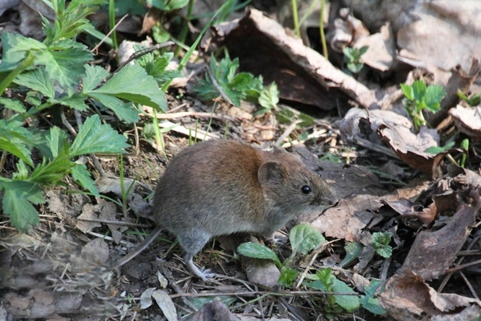 В Мелеузе местные жители жалуются на нашествие мышей Фото: Татьяна Черникова