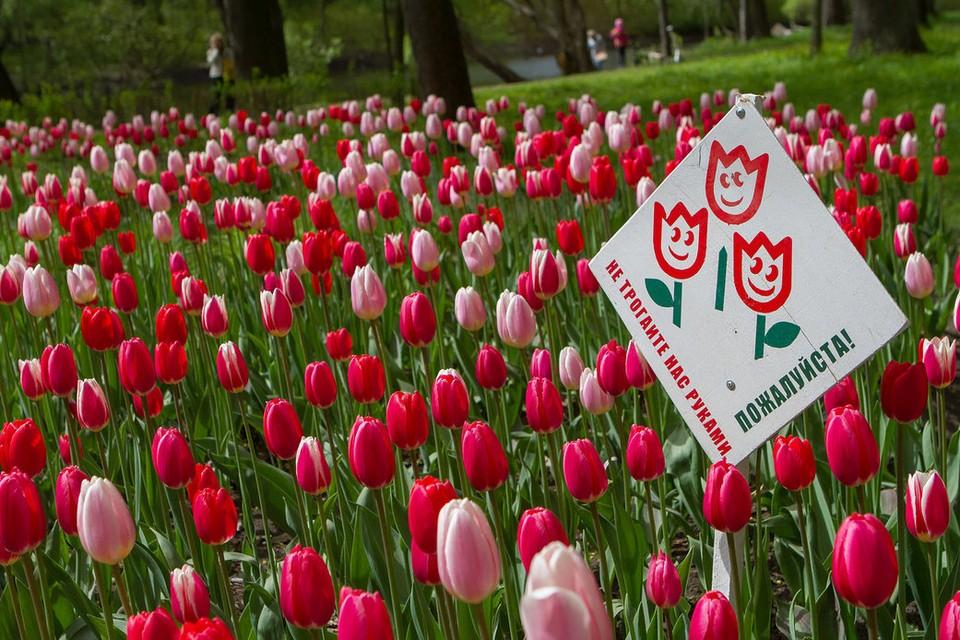 Фестиваль тюльпанов в ЦПКиО пройдет 19-20 мая