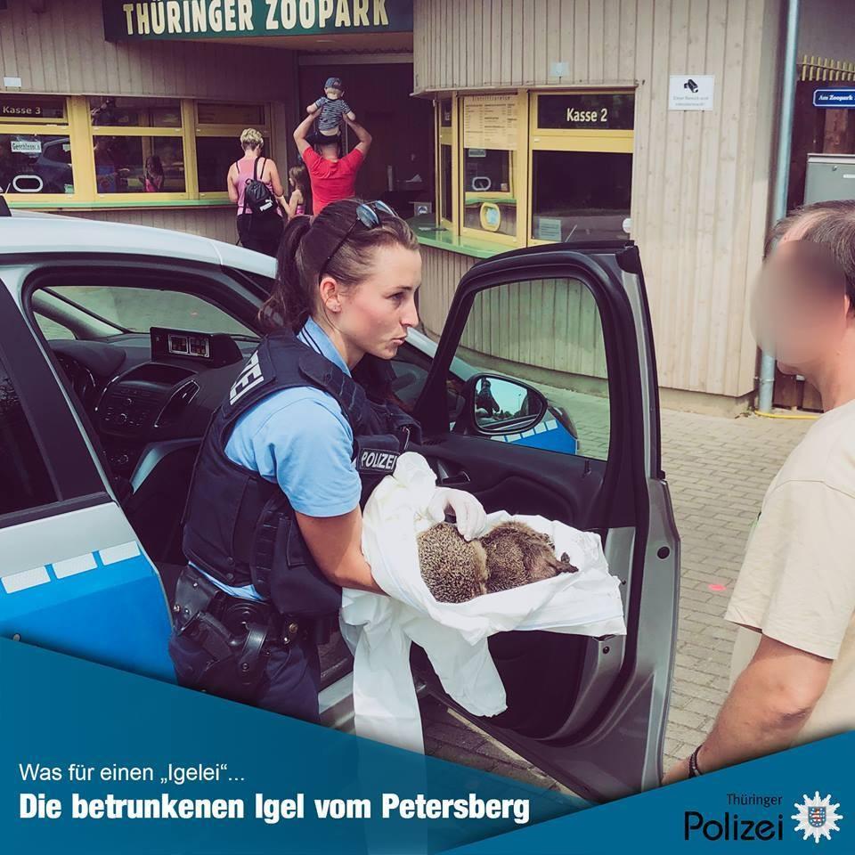 В Германии спасли страдающих от похмелья ежей
