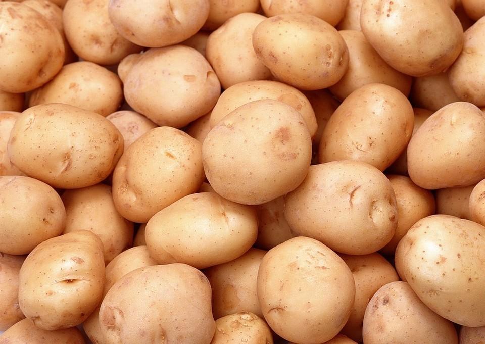 Из-за тяжелого сезона картошка может подорожать. ФОТО: supersadovnik.net