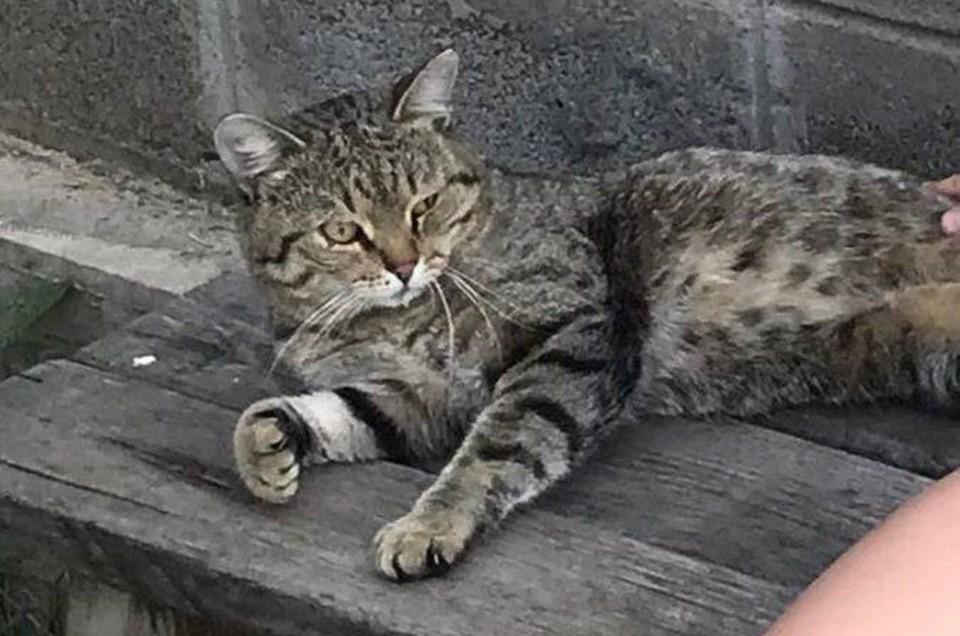 Тишка вернулся! Фото: семейный архив кота Тихона