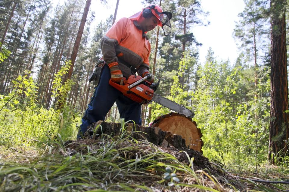 Путин подчеркнул важность выработки современных подходов в сфере сбережения ресурсной базы и охраны окружающей среды