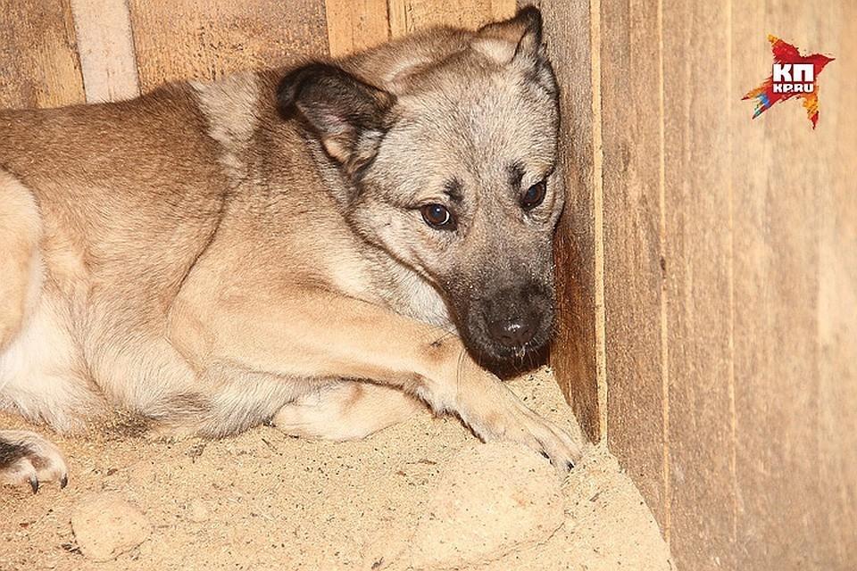 Собачий концлагерь «процветает» в Нижегородской области уже несколько лет