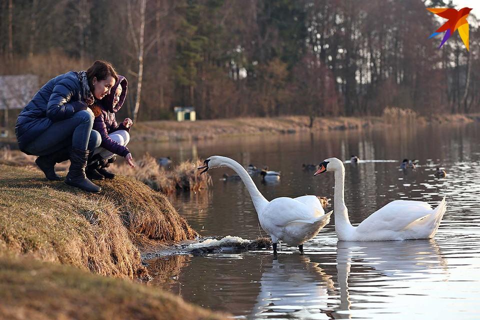 Климат в Беларуси постепенно меняется.
