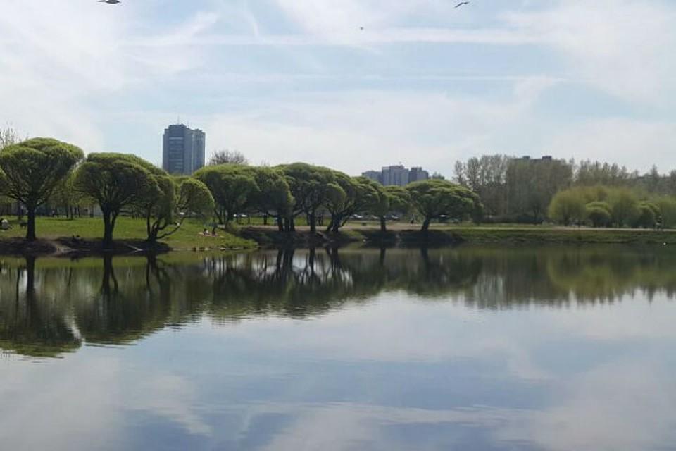 Парк останется парком. Целиком и полностью