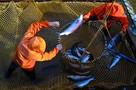 Ржавые суда и заброшенные поселки: Из-за чего рыба на прилавках никак не подешевеет