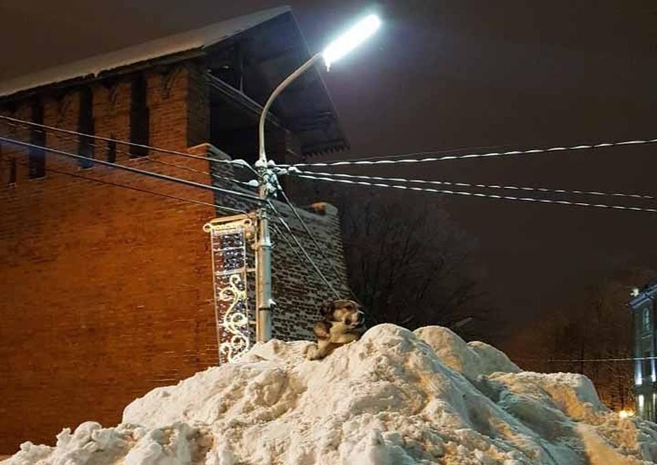 В Смоленске ищут дом метису Полкану. ФОТО: ВКонтакте.