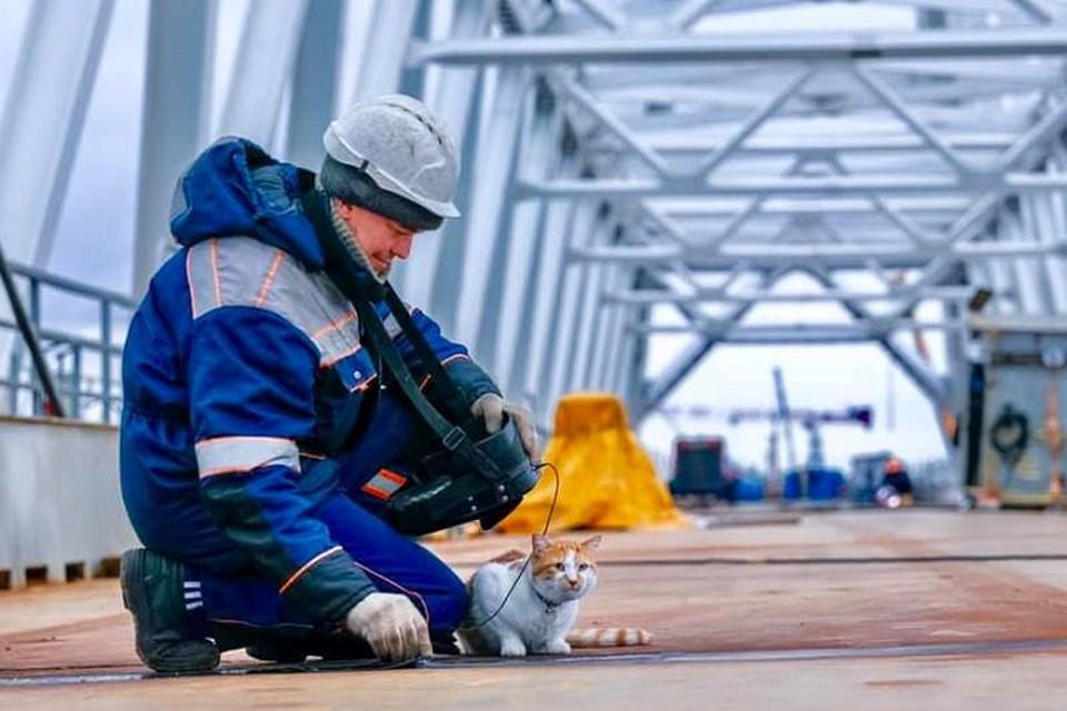 Кот помогает дефектоскопистам проверять швы на железнодорожной части моста через Керченский залив. Фото: Кот Моста/VK