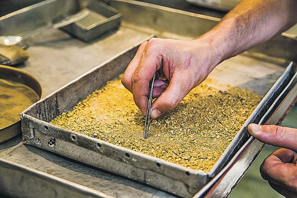 Объем добычи золота в 2018 году на участках «Ксеньевского прииска» более 1300 килограммов. Фото: Андрей КИРОВ