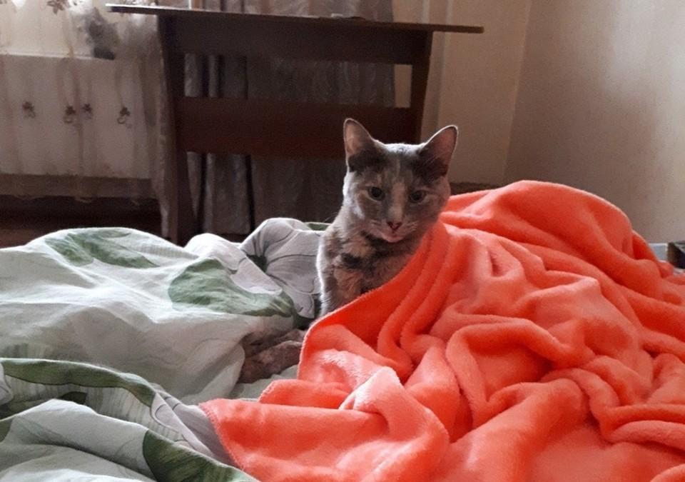 «Обняла меня лапками, как ребенок»: красноярка нашла свою третью кошку, пропавшую после взрыва на Кандагарской. Фото Татьяны Котовой