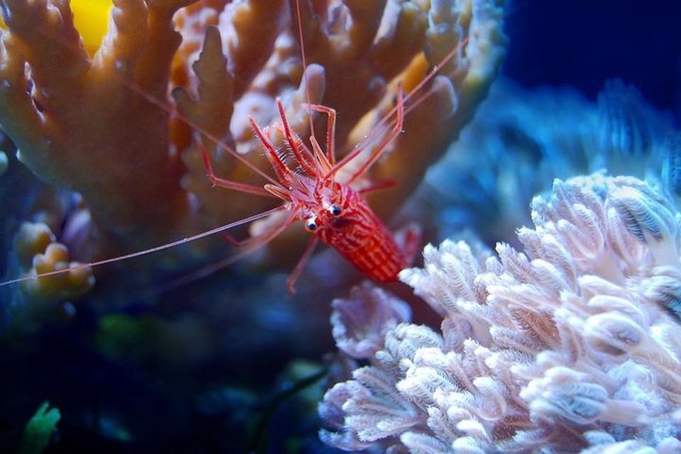 Специалисты изучают поведение морских обитателей