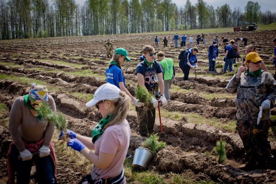 Волонтеры сажают деревья в Удмуртии Фото: пресс-служба движения ЭКА