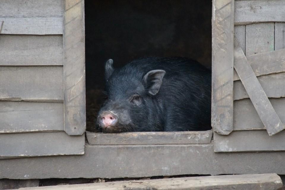 Россельхознадзор заберет ветеринарный контроль из регионов, теперь следить за состоянием животноводства и сельского хозяйства будут в столице