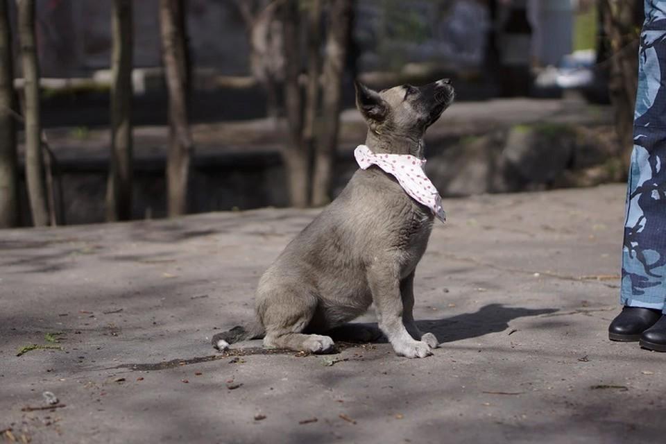Сотрудники петербургского рекламного агентства приютили семерых щенков Фото: Сайт Рекламные псы
