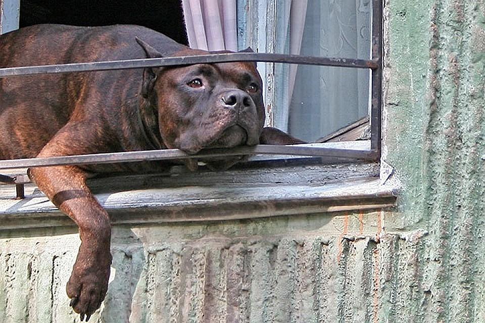 Уголовное дело по факту жестокого обращения с собакой возбуждено в Томске