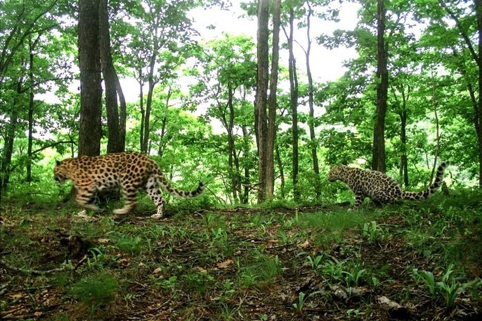 Фото: Национальный парк «Земля леопарда».