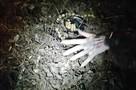 Ростовский маг напугал своих учеников ожившим трупом на кладбище