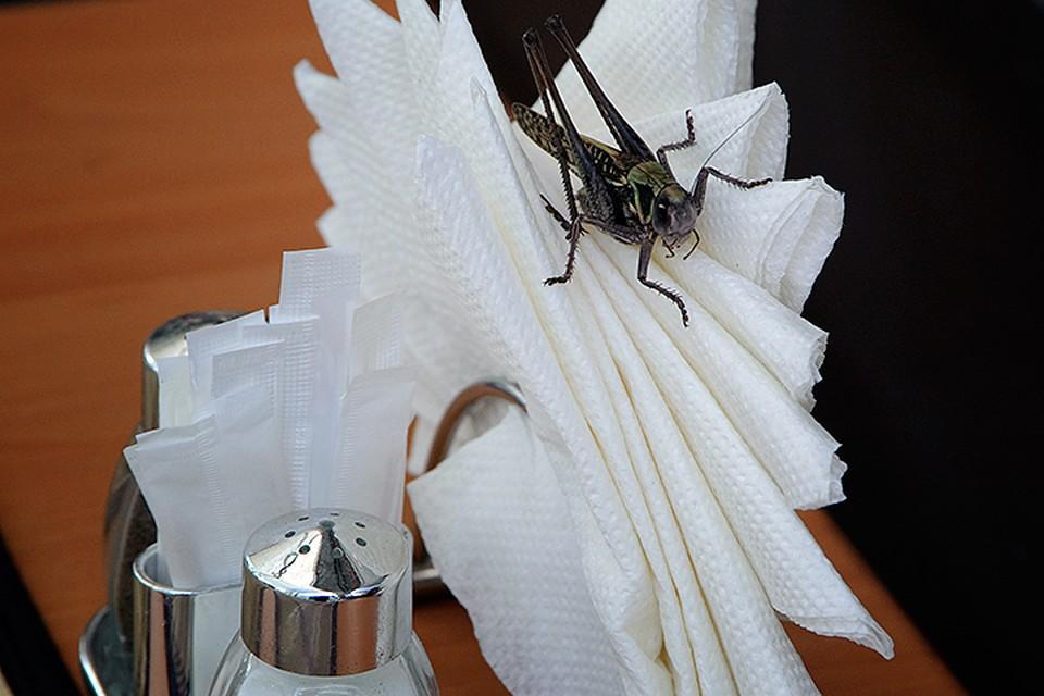 Два миллиарда человек, а это четверть населения планеты, едят насекомых