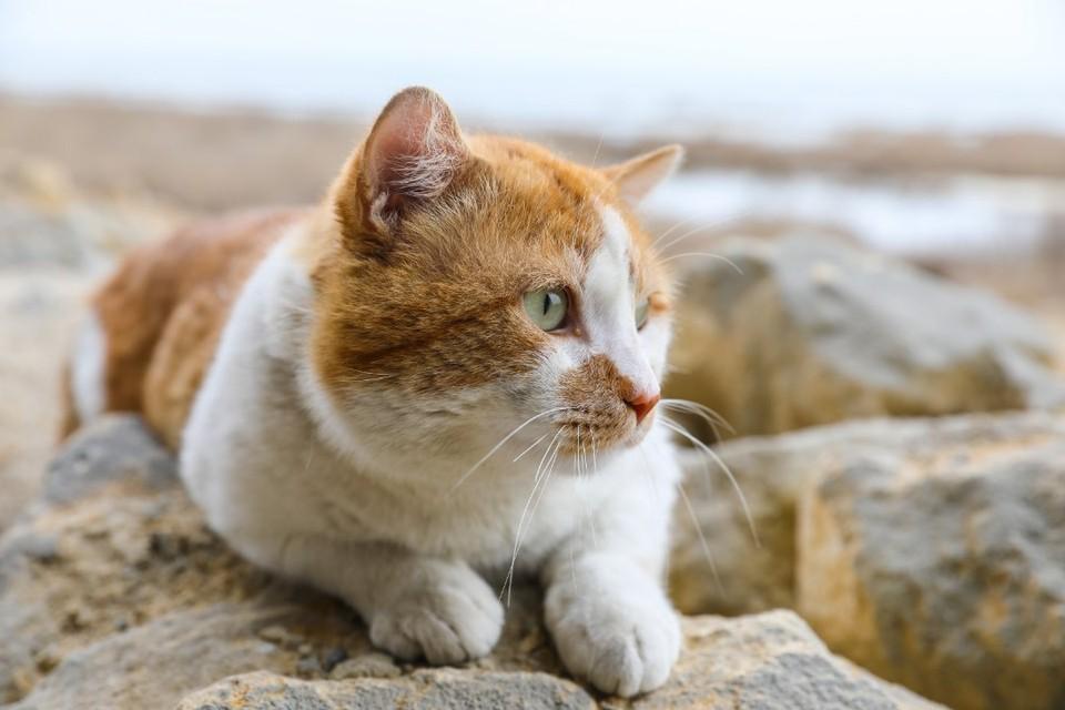 Настоящему коту по силам пережить и первый рабочий день. Фото: Кот Моста/VK