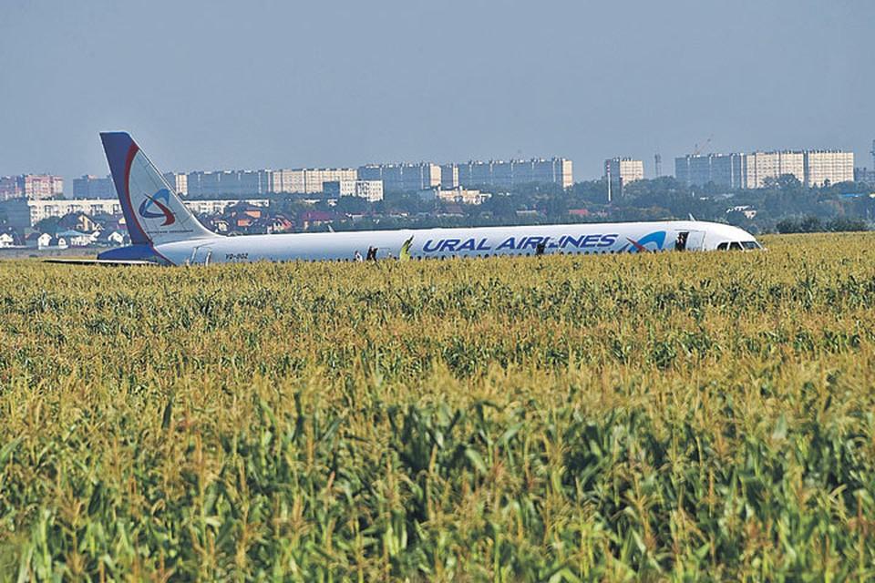 «Аэробус» посадили прямо на кукурузном поле.