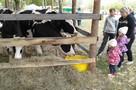 На молочный фестиваль за Окой приехало больше тысячи рязанцев
