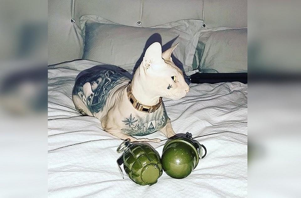 Котика ищут уже пять дней. Фото: Кот Бес в Instagram