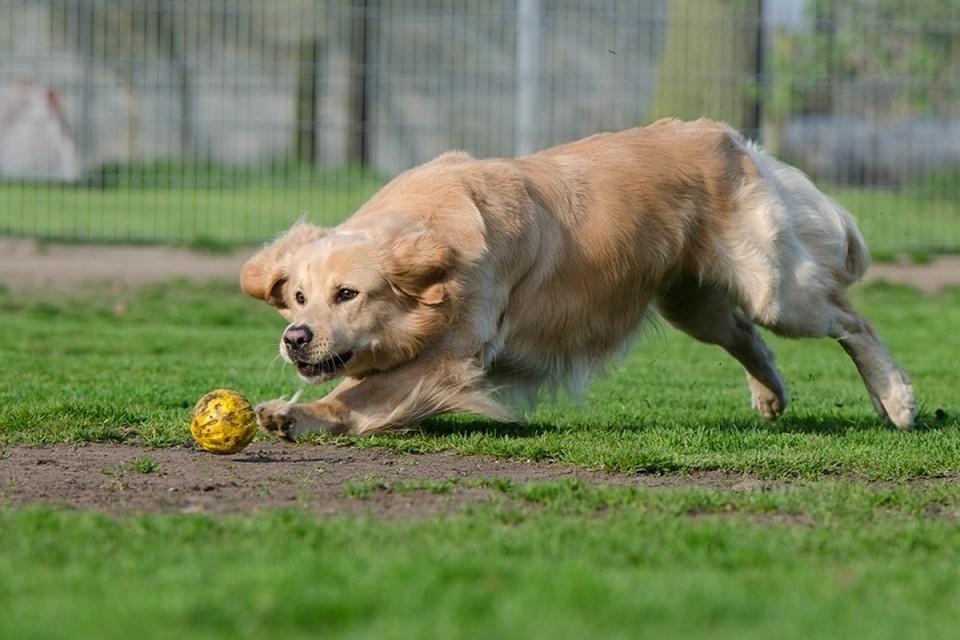 Ноябряне поддержали проект обустройства площадки для выгула собак Фото: pixabay.com