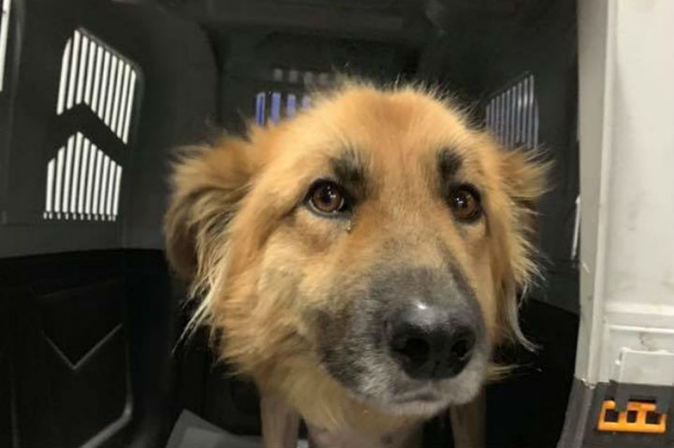 Иркутские волонтеры спасли собаку из Тулуна, которую ветеринары хотели усыпить. Фото:Елена Прадчук.