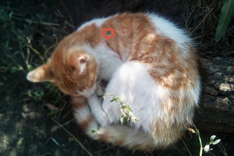 """Котяка-неубивака, который чудом выжил. Фото: """"Леший"""""""