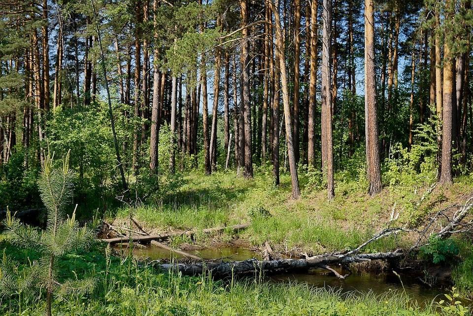 Мужчине грозит до семи лет тюрьмы за незаконную вырубку деревьев
